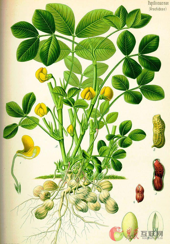 背景 壁纸 绿色 绿叶 盆景 盆栽 树叶 植物 桌面 694_998 竖版 竖屏图片